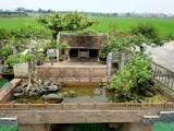 Ngỡ ngàng với nhà 2 mét vuông có sân vườn, ao bèo